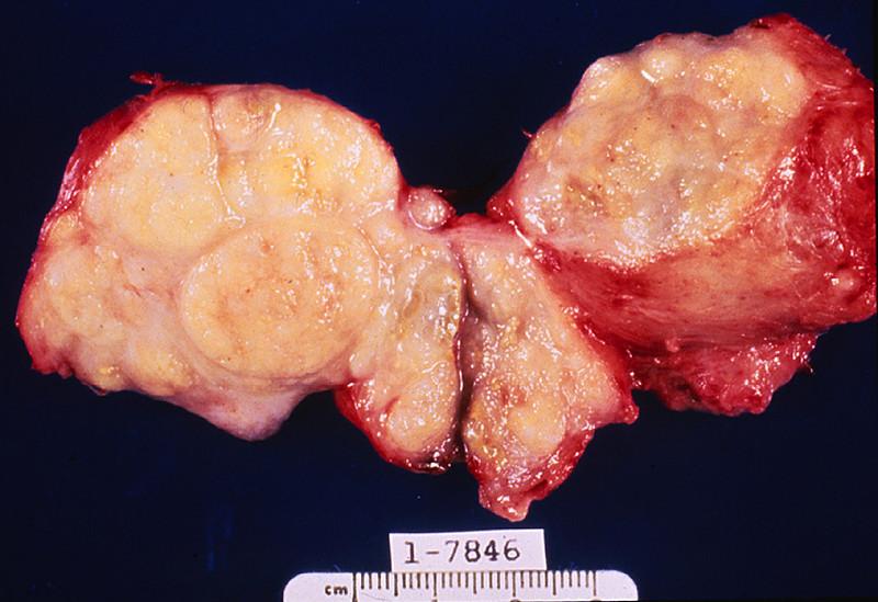Dog stomach anatomy